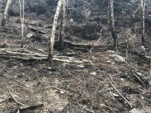 Construcción de diques en el área afectada por el incendio