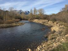 Estaquillado en el río Esla