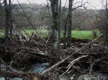 Taponamiento en el río Trefacio